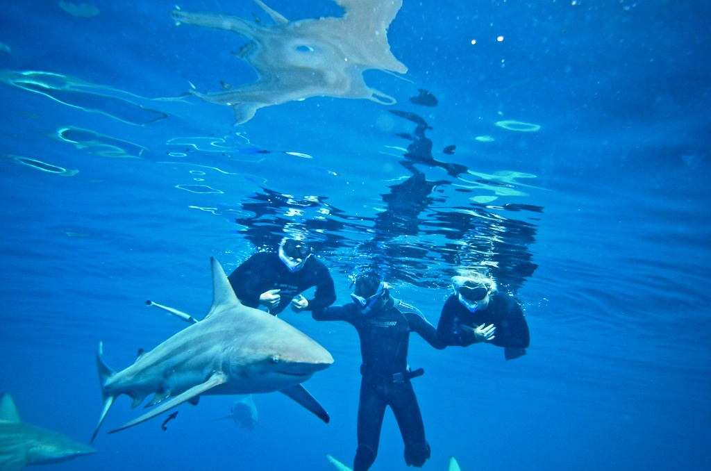 Join Us At Shark Cage Diving Durban For An Incredible Snorkeling With Sharks Adventure Book Your Tour Today